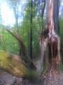 arbre séparé