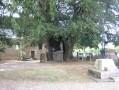 Arbres chapelles