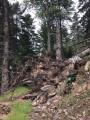 arbres déracinés 2 14 juillet 2021
