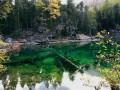 Arbres morts dans le Lac Vert