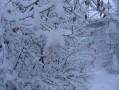 Arbustes dans la neige