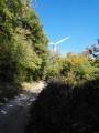 Dans la Forêt de Marsanne