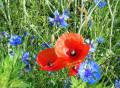Au printemps, les fleurs vous font une haie d'honneur