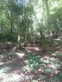 Dans le haut du bois de Bénac sur les pentes de l'Araü