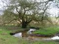 Au bord d'un des nombreux ruisseaux