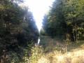 Au bout du lac d'Amance le long d'un ruisseau