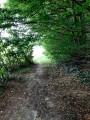 Au bout du tunnel de verdure, la lumière