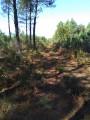 Au milieu des pins au Nord du village de Labrit