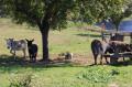 Auberge du Val-au-Cesne, les ânes