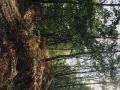 Automne en forêt