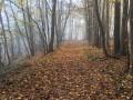 La Butte de Tous Vents, les Bois du Marais et Mal Acquis