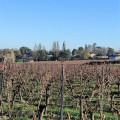 Bois et vignes entre Tizac-de-Lapouyade et Maransin