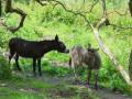 Avec nos amis les bêtes