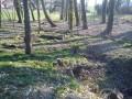 Bac a chanvre  recouvert par la végétation