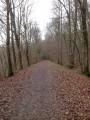 La Forêt de Méridon et l'Ancienne Voie Ferrée de Montabé