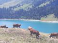 Petit tour au bord du Lac de Roselend