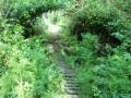 Chemin en rondins