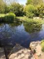 Bassin aux nénuphars