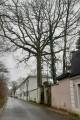 Beaux arbres rue Maurice Chevalier