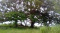 Beaux arbres