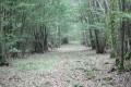 Belle allée forestière dans le bois de Foye