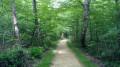 Belle allée forestière