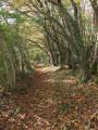Par le bois de Plogastel-Saint-Germain