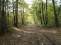 Belle descente en forêt, en haut du Bois de Chamonat - CP Jean-Louis Droin