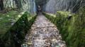 Belle série d'escaliers