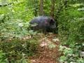 Ben mon cochon !