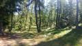 Bois d'Anelle