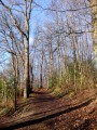 Vauboyen, le Bois de Bel-Air et le Bois de Montéclin