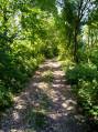 Bois de Farbus