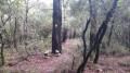 Bois de l'Eouvière