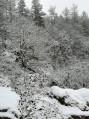 Bois de la Pérouse sous la neige