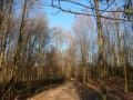 En forêt de Retz  Le Rond de Chatillon