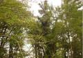 Bois de Marquinaux