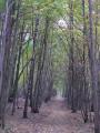 Bois de Ronquerolles