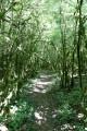Bois des Dubes avec ses étranges arbres couverts de mousse