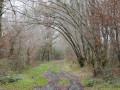 Bois des Laurets