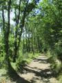 Bois des Lugans