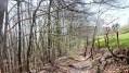 Bois du Châtelar en avril