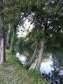 Bords de Charente