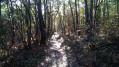 Une boucle dans les bois au Nord de Bouloc
