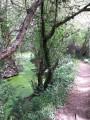Bras de la Charente dans la petite prairie