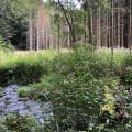 Sentier des amoureux depuis le Parc Thermal de Bains-les-Bains