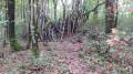 Cabane dans le bois des Magnolias