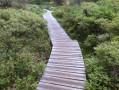 Sentier de découverte de la tourbière des Saisies