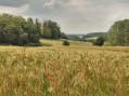Woelfling - Wiesviller par les éoliennes
