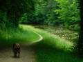 De Sury à Vitry par le canal et ses étangs